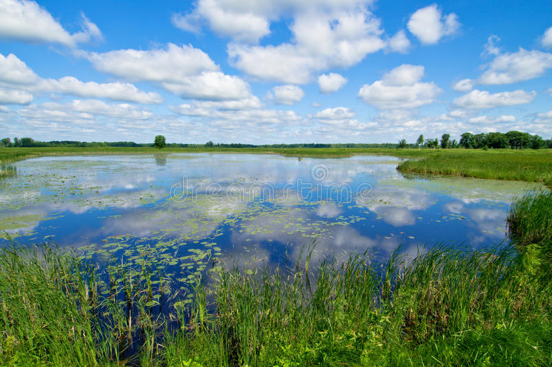 Waterlilies and clouds stock photo