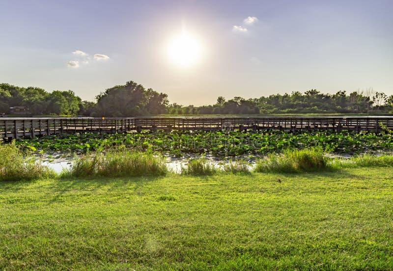 Waterlily на озере Картере Айове и Омахе Небраске стоковая фотография rf