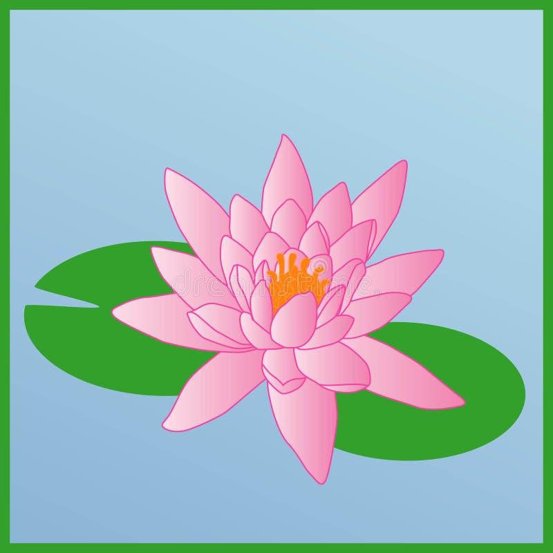 waterlily ilustracja wektor