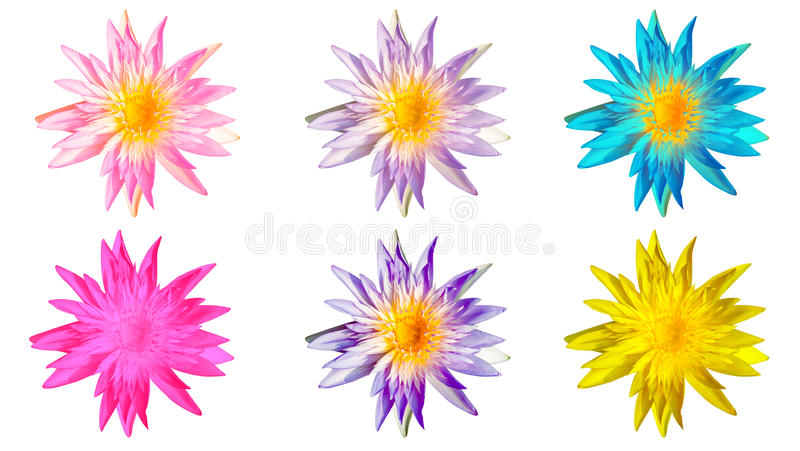 WaterLily blomma royaltyfria bilder