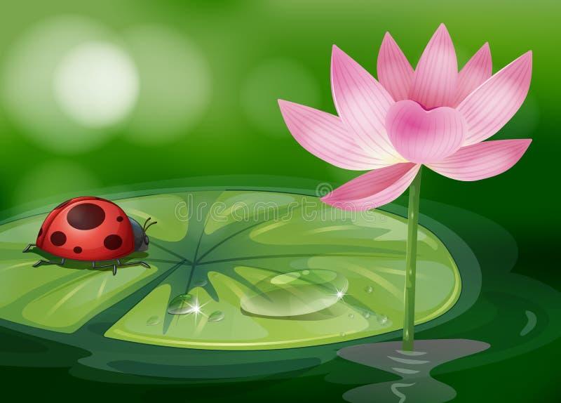 A waterlily com um erro vermelho ilustração do vetor