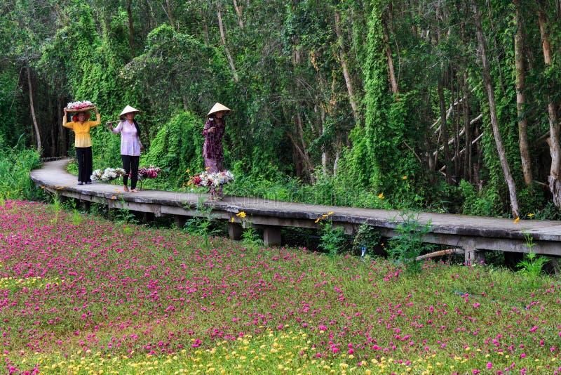 Waterlily kwiatów sezon zdjęcie royalty free