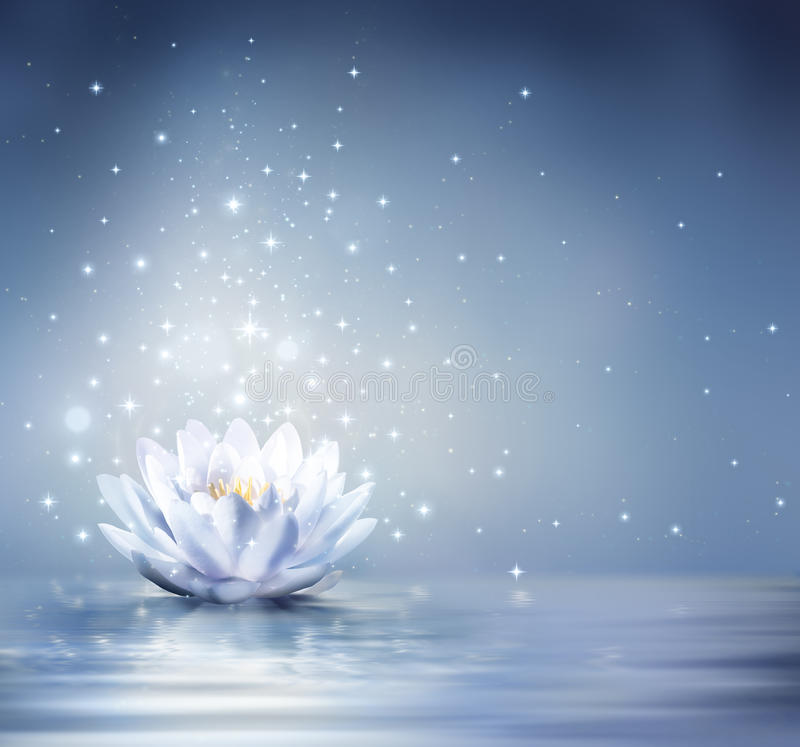 Waterlily light blue on water royalty free stock image