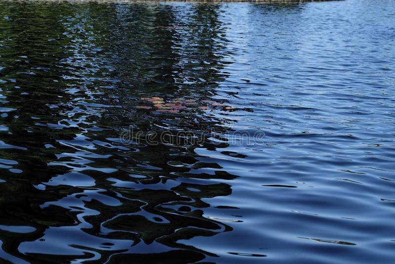 Waterlily op water in de Fontein binnen de Amerikaanse Begraafplaats royalty-vrije stock foto