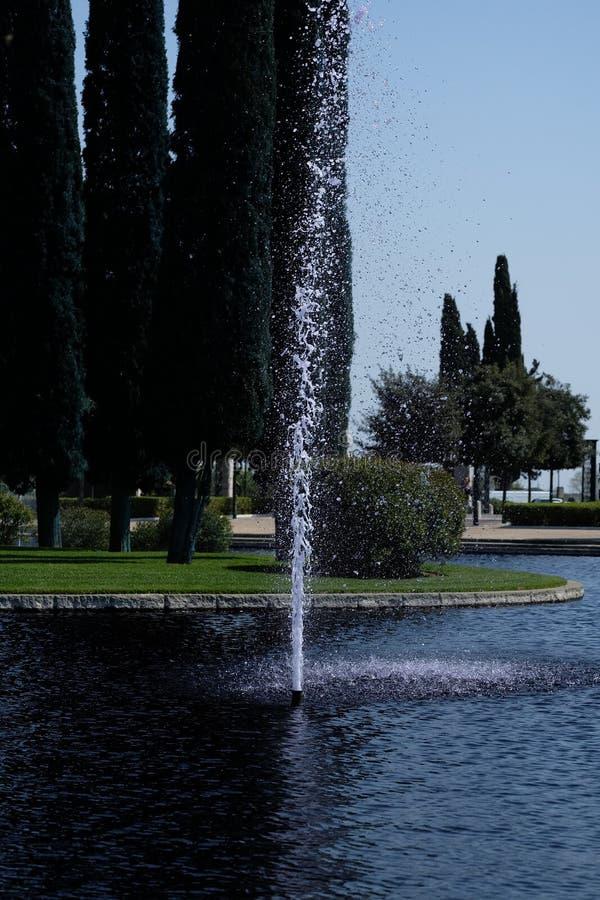 Waterlily op water in de Fontein binnen de Amerikaanse Begraafplaats royalty-vrije stock afbeeldingen