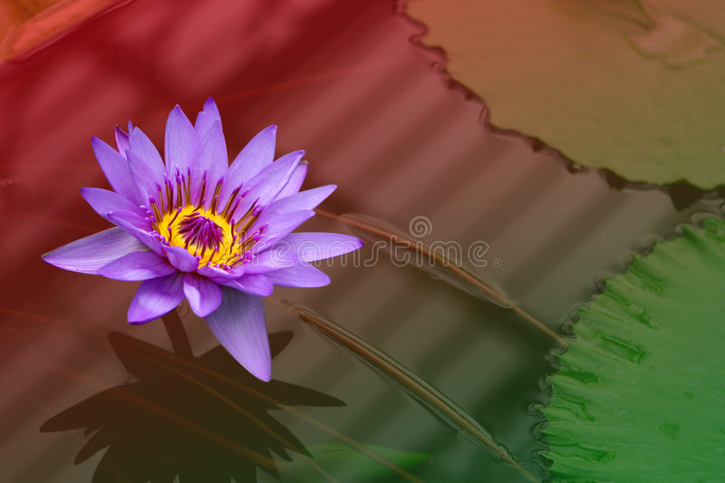 Download Waterlily On Red And Green. Stock Image - Image of accent, card: 1717247