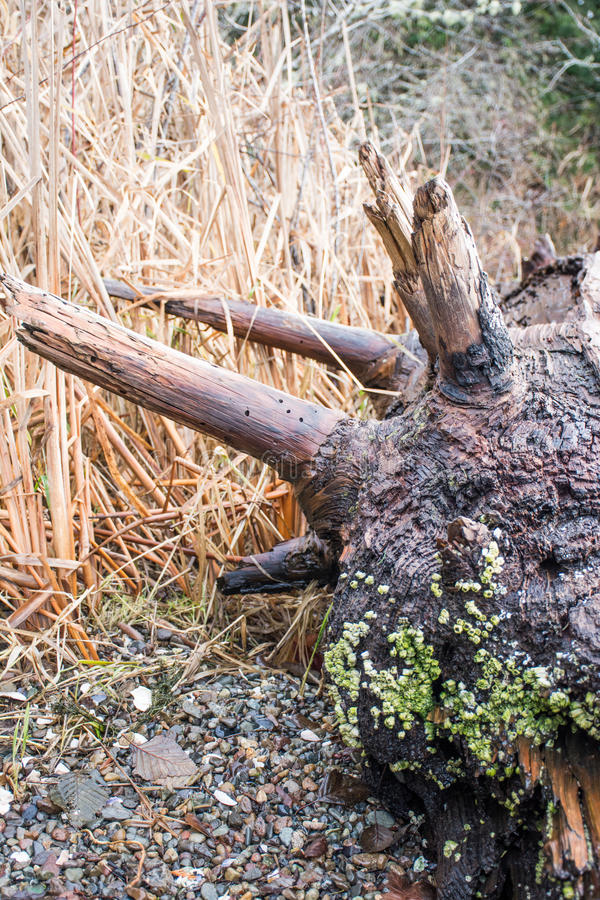 Waterlogged Log stock photography