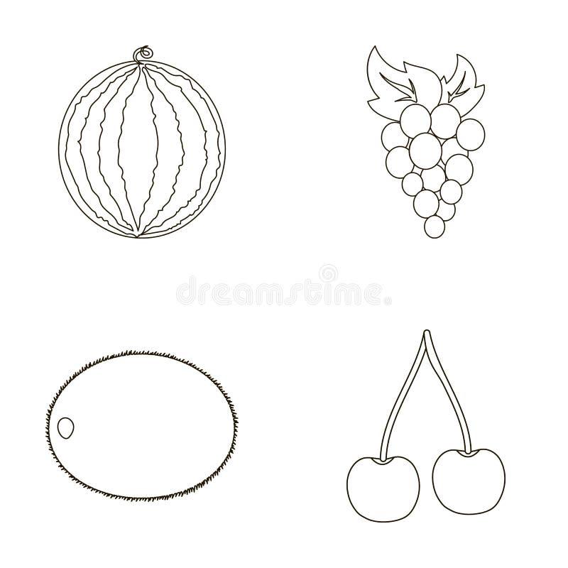Watermeloen, druiven, kers, kiwi Vruchten geplaatst inzamelingspictogrammen in van de het symboolvoorraad van de overzichtsstijl  vector illustratie