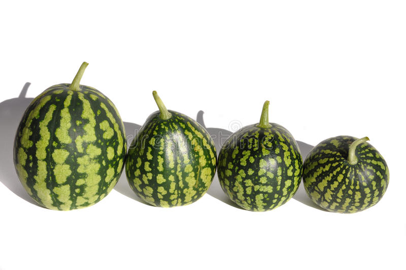 Watermeloenen stock afbeelding