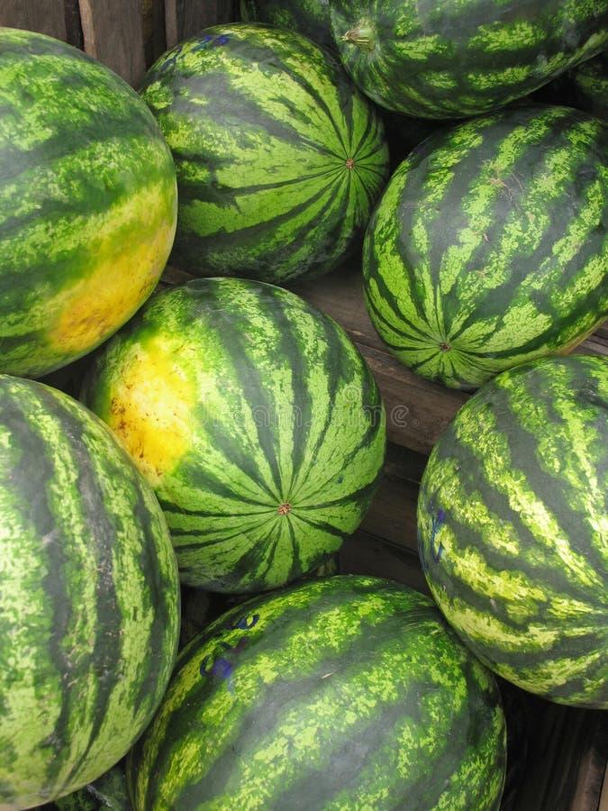 Watermeloenen voor verkoop bij de markt van landbouwers stock foto