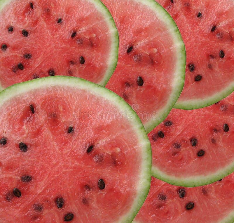 Watermelon royalty free stock image