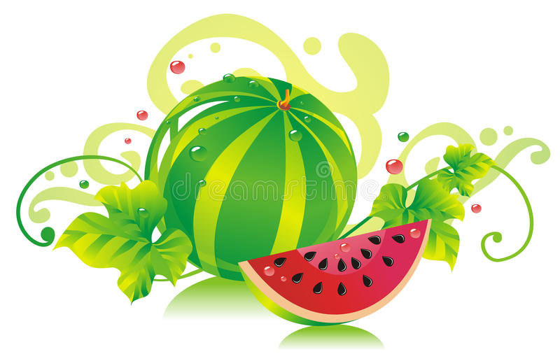 Watermelon. Water-melon with a water-melon slice and water-melon leaves vector illustration