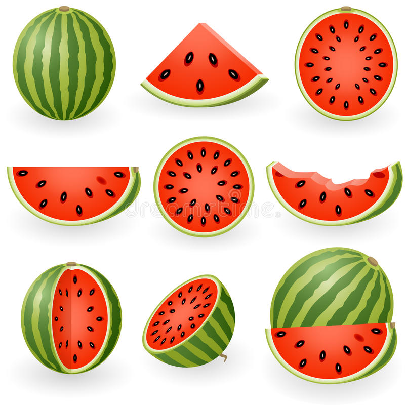 Watermelon. Vector illustration of watermelon and slices vector illustration