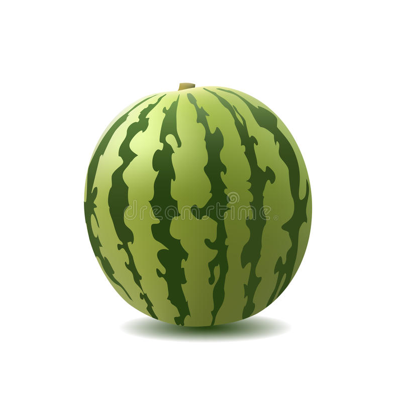 Download Watermelon stock vector. Image of peel, nutrition, round - 13208867
