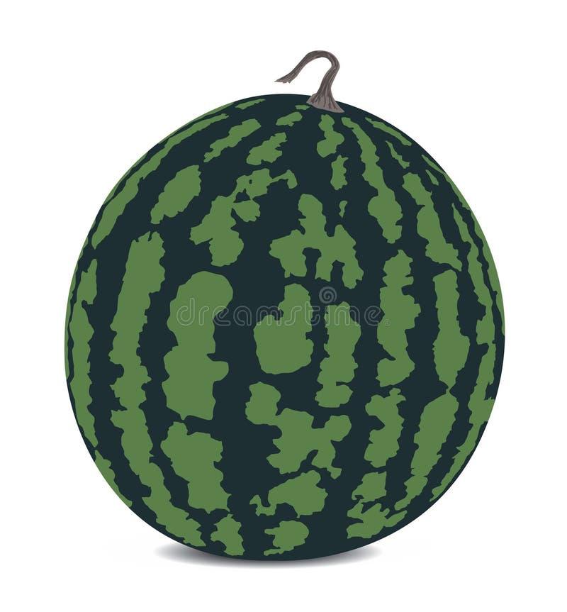 Download Watermelon stock vector. Illustration of color, dessert - 17501475