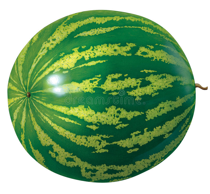 Download Watermelon stock illustration. Illustration of sweet - 17869423
