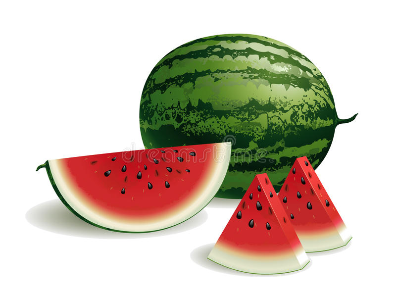 Download Watermelon stock vector. Illustration of dessert, watermelon - 21330161