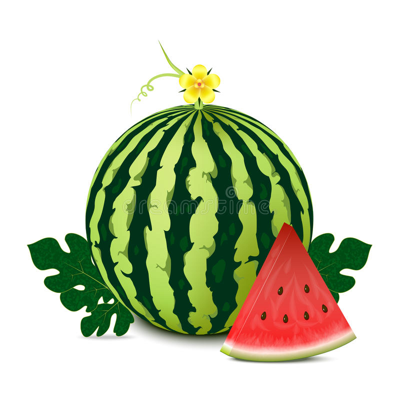 Free Watermelon Stock Photography - 32436092