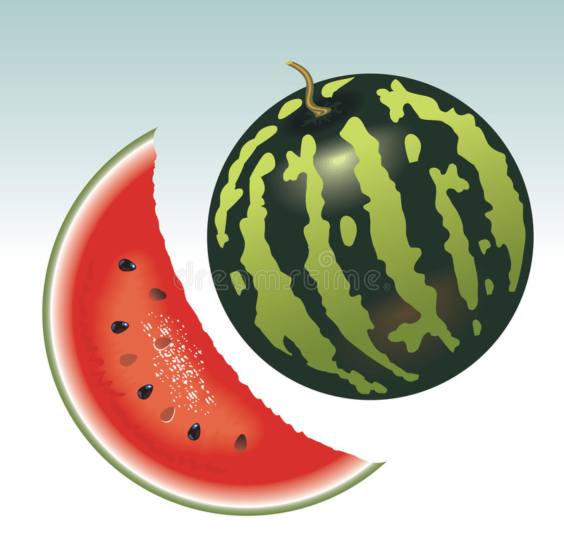 Watermelon. Appetizing slice of watermelon. Vector image royalty free illustration