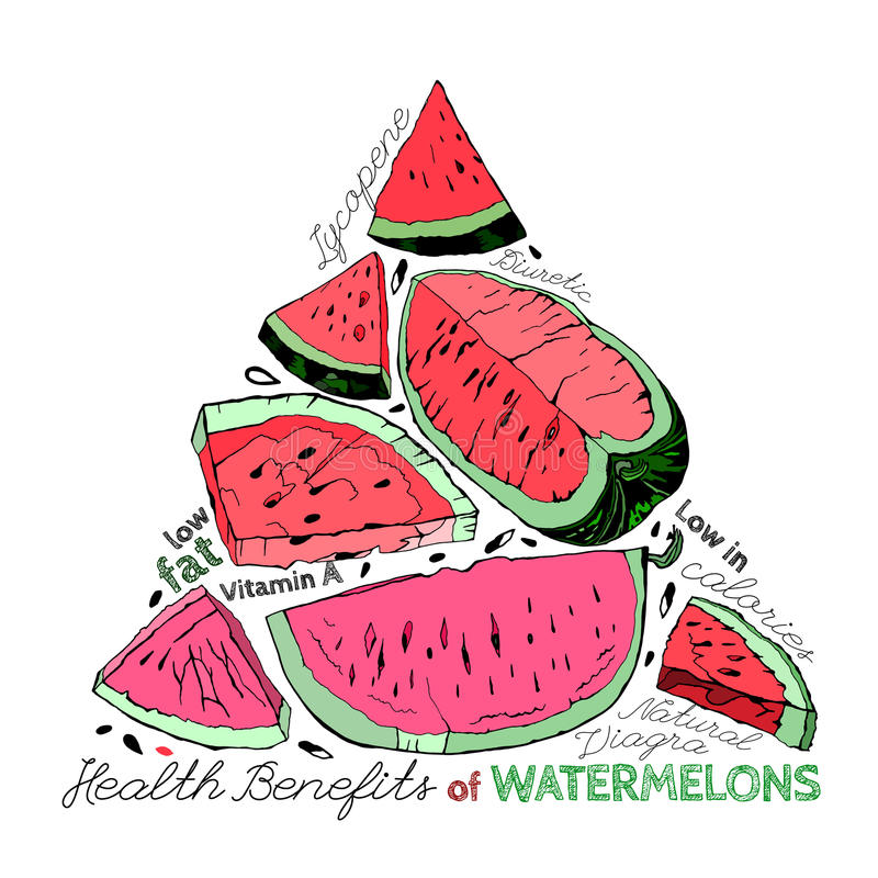 Watermelon Benefits 02 A royalty free illustration