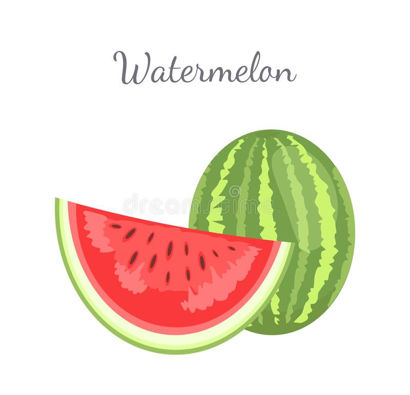 Watermelon Citron Melon Berry Ripe Tropical Fruit. Watermelon or citron melon berry, ripe tropical plant whole and cut piece vector icon isolated on white. Food vector illustration