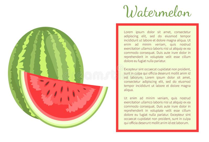 Watermelon Citron Melon Berry Ripe Tropical Fruit. Watermelon or citron melon berry whole and cut, ripe tropical or subtropical plant vector poster frame for vector illustration