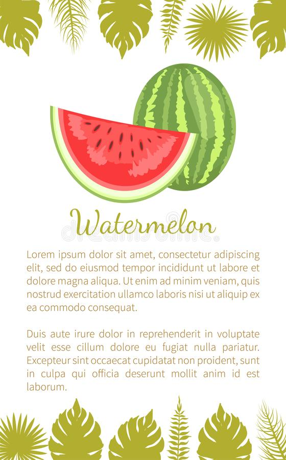 Watermelon Citron Melon Berry Ripe Tropical Poster. Watermelon or citron melon berry, ripe tropical plant vector poster with text sample and palm leaves. Food stock illustration