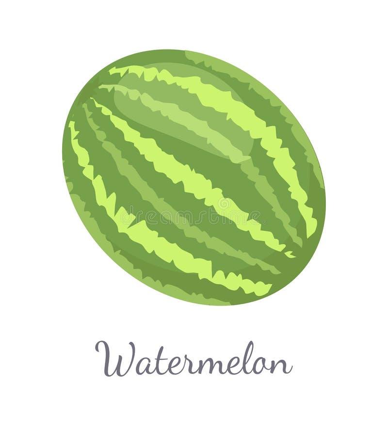 Watermelon Citron Melon Berry Ripe Tropical Fruit. Watermelon or citron melon berry, ripe tropical or subtropical plant vector illustration icon isolated on vector illustration