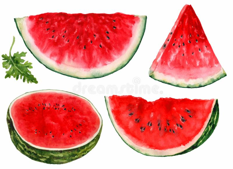 Watermelon, cut into pieces, on a white background. Watercolor royalty free illustration