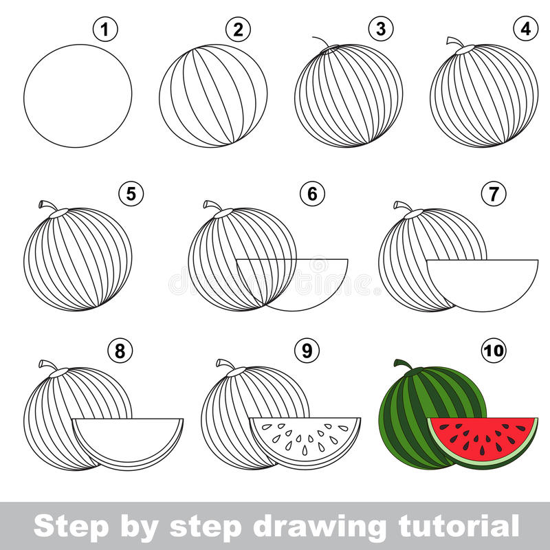 Download watermelon drawing tutorial stock vector illustration of skill sweet 69553722
