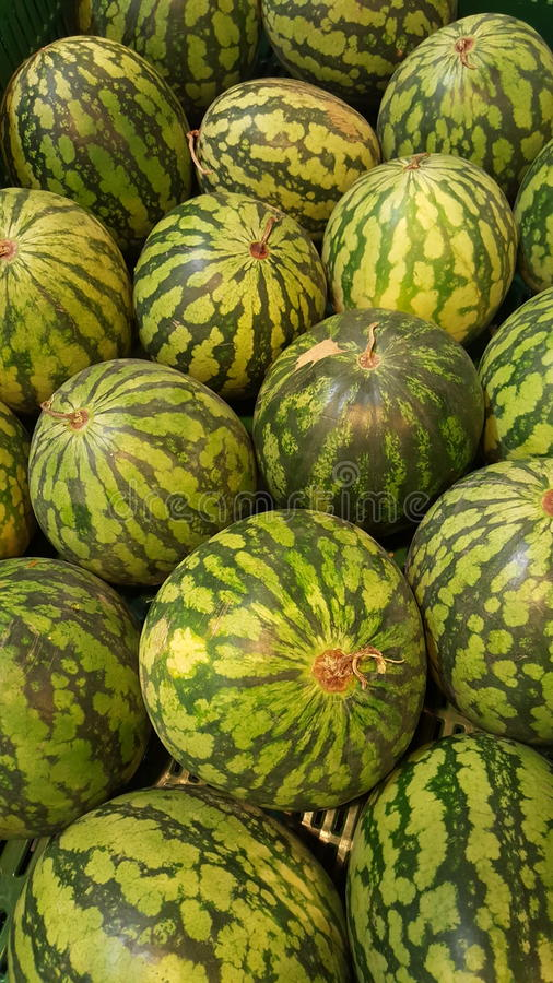 Watermelon. Fruit and vegetable shop. Watermelons stock photography