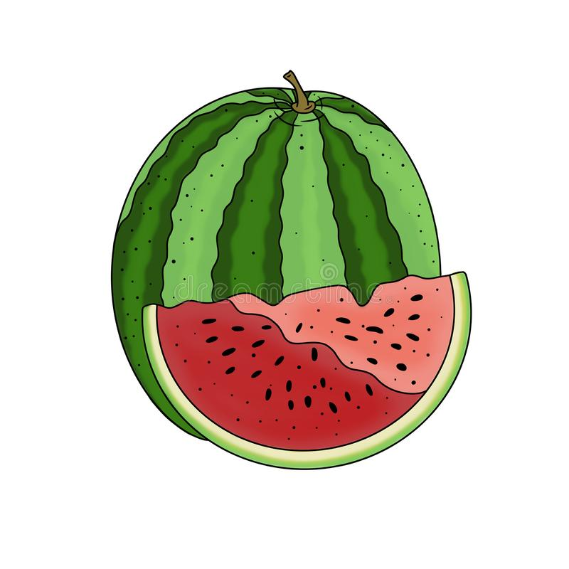 Watermelon hand drawn vegetarian food illustration element isolated on white background stock illustration