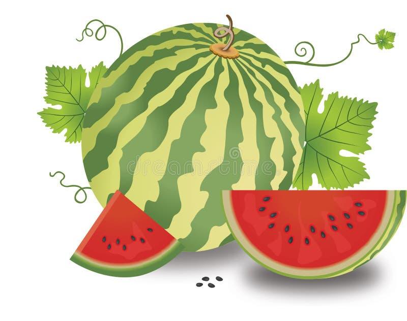 Download Watermelon, illustration stock vector. Illustration of melon - 25967522