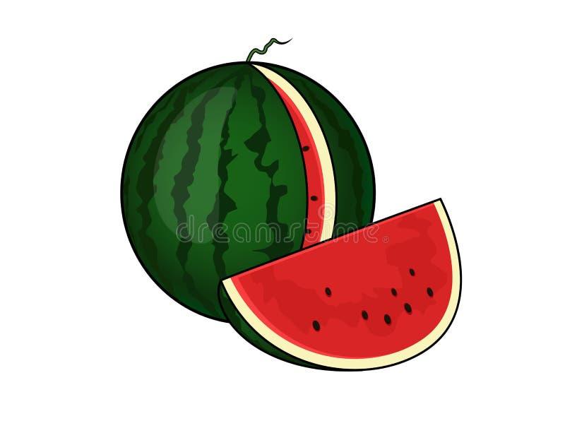 Watermelon. Illustration of a sliced watermelon vector illustration