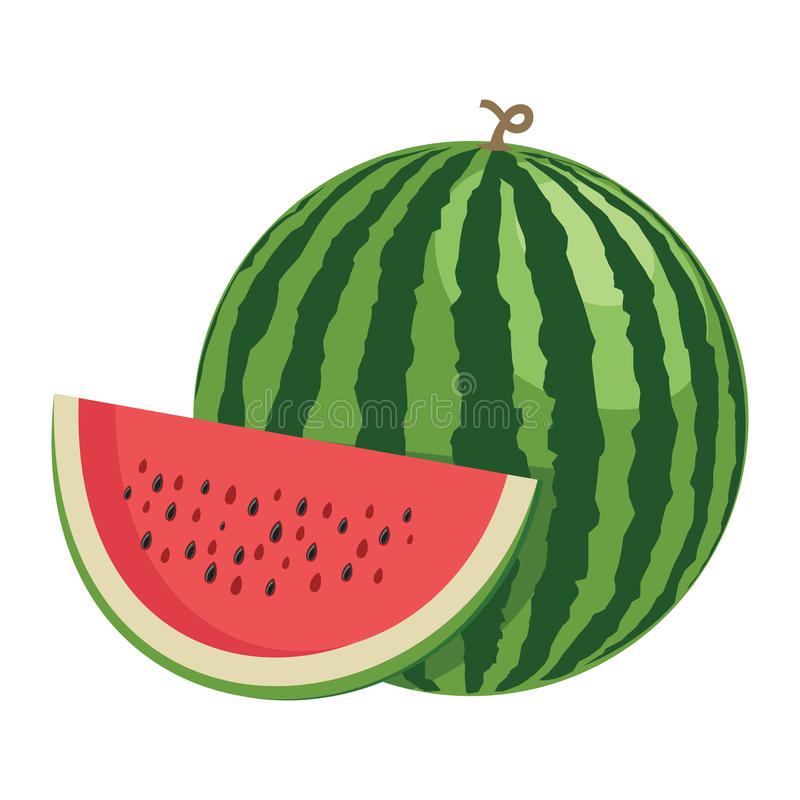 Watermelon. One whole watermelon fruit and a half. stock illustration