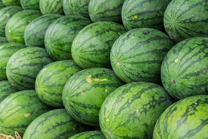 Watermelon. Set in a row on straw royalty free stock photography