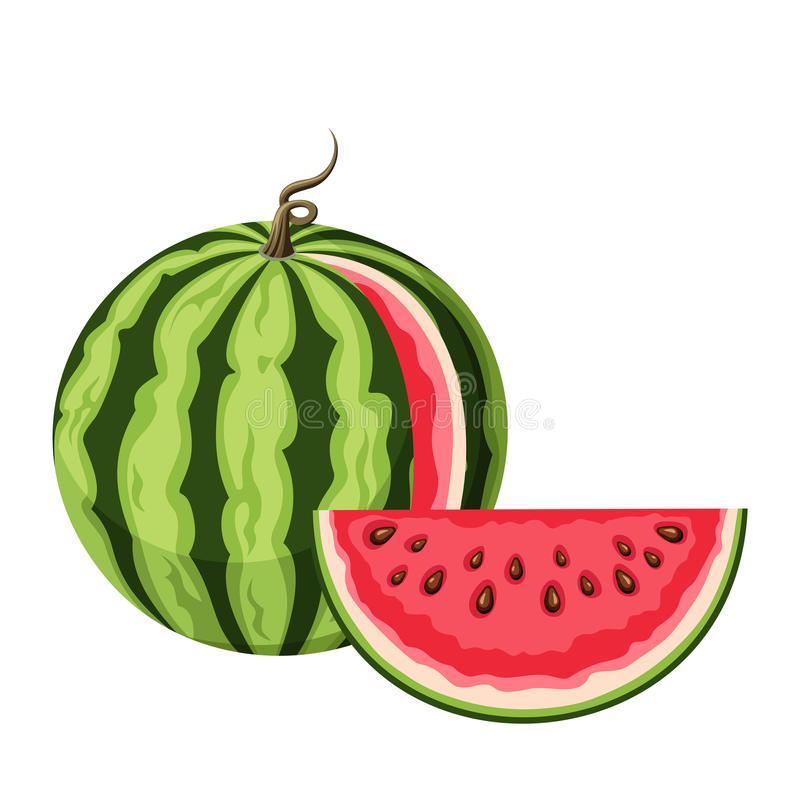 Watermelon with a slice. Vector illustration. Vector illustration of watermelon with a slice isolated on a white background royalty free illustration
