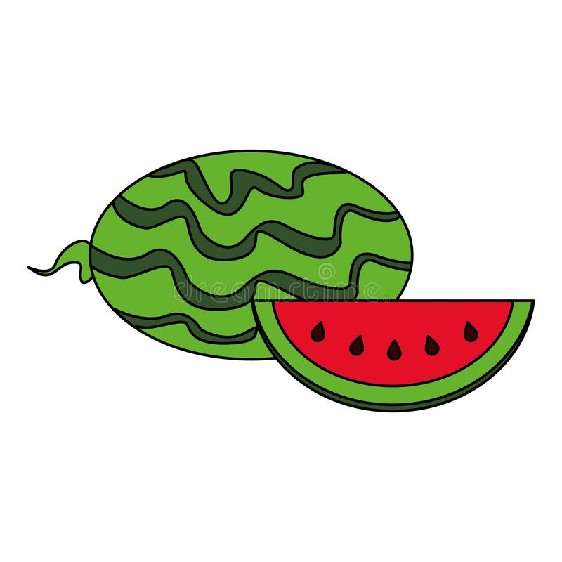Watermelon sliced fresh fruit healthy food. Cartoon isolated vector illustration graphic design vector illustration