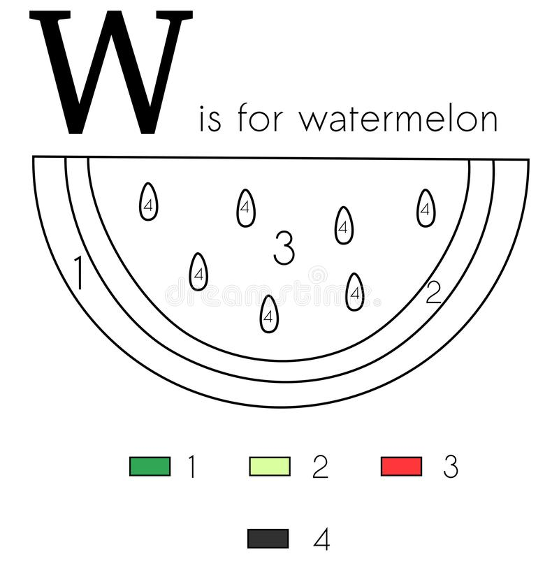 Watermelon. Vector alphabet letter W, colouring page. Vector alphabet letter W for children education with funny numbering colouring page. This illustration can stock illustration