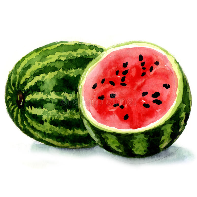 Free Watermelon. Watercolor Illustration Stock Photography - 38970412