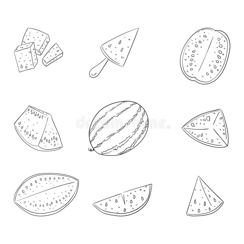 Watermelon whole and sliced outline illustrations set vector illustration