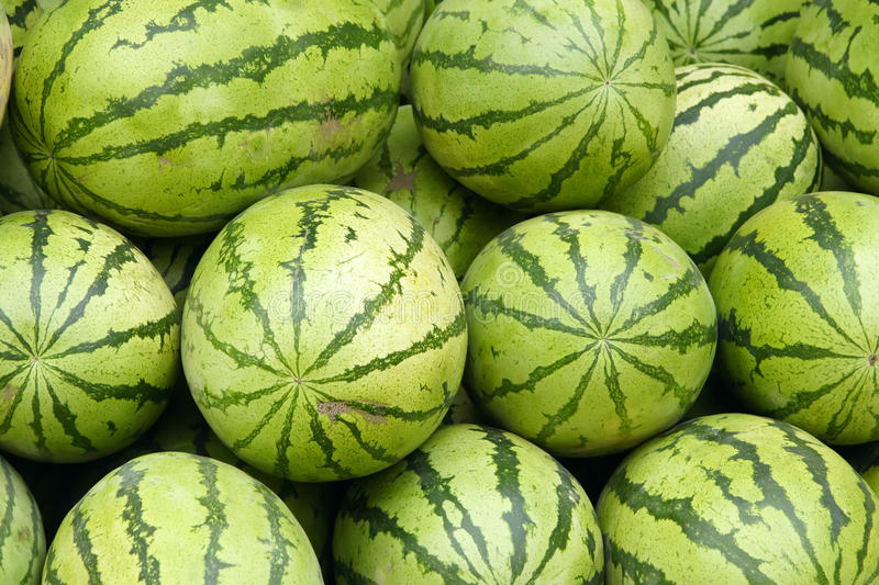 Watermelons. The background of many watermelons royalty free stock images