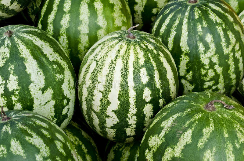 Download Watermelons stock photo. Image of harvest, vegetarian - 26850268