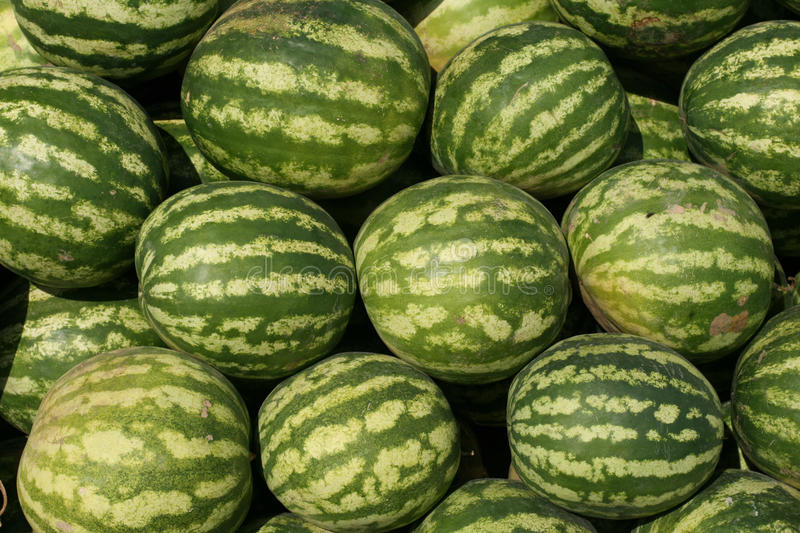 Download Watermelons In A Marketplace Stock Photo - Image of organic, gardening: 18542196