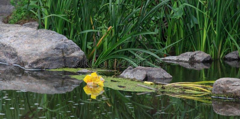 Watermiddelen dat met divers huisvuil en afval, Verontreinigde rivieren verontreinigd is stock foto
