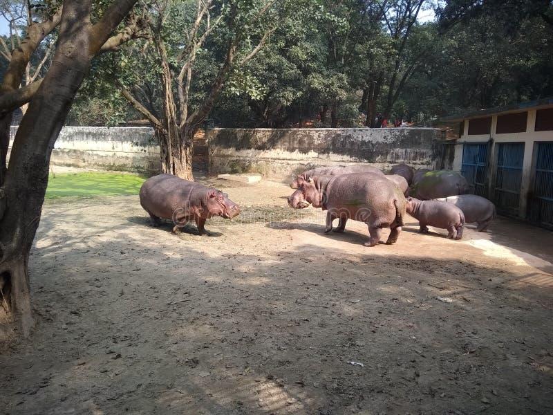 Waterolifant royalty-vrije stock foto