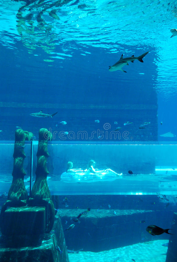 waterpark aquaventure стоковые изображения rf