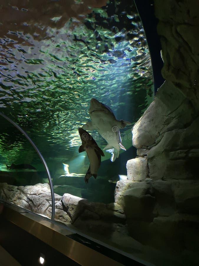 Waterpark rekin?w Lithuania muzealny megashow zdjęcia stock