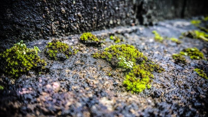 Waterpasi stock afbeelding