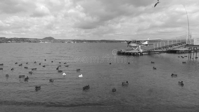 Waterplane на taupo озера стоковое фото rf